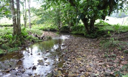22 ACRES NEAR OF ISLA GRANDE COLON