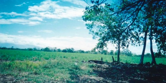 56HA OF LAND IN CHIRIQUI