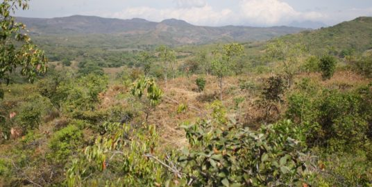 4.98 HA FOR SALE IN VERAGUAS