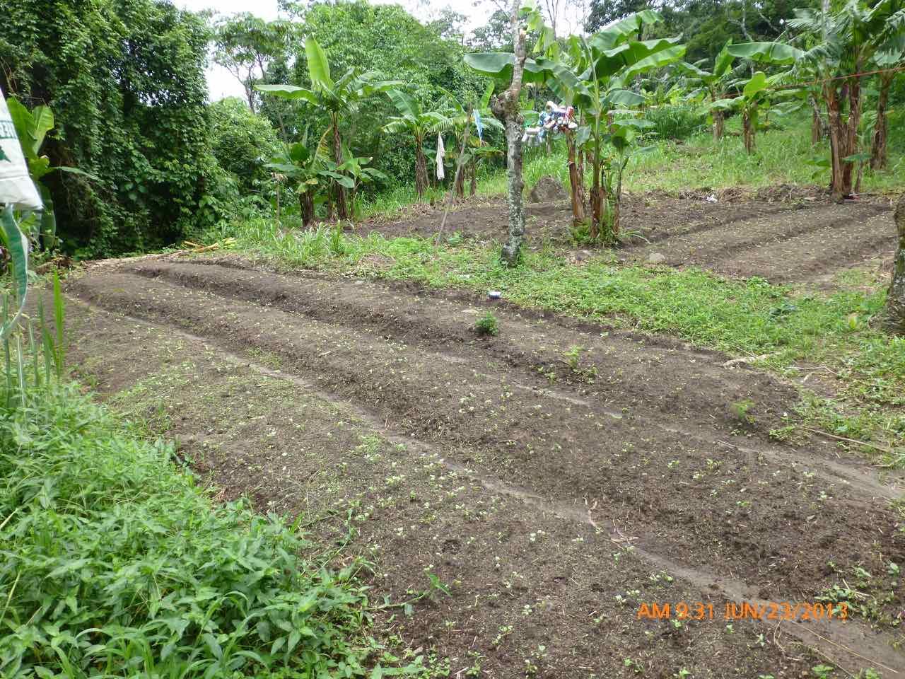 CHUNGALULA FARM