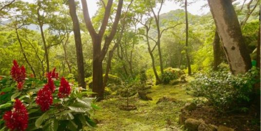SPLENDID LAND IN THE HEART OF ALTOS FOREST