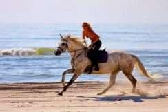 caballo A1805-161 - 1