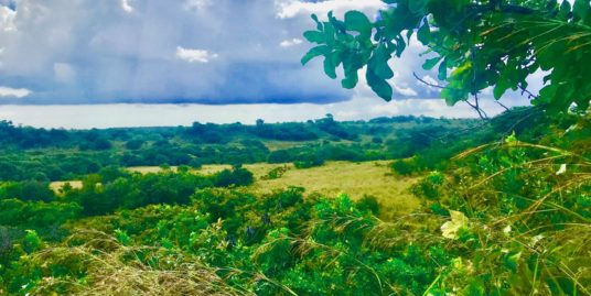 54 ha LAND IN CABUYA-LAS LAJAS