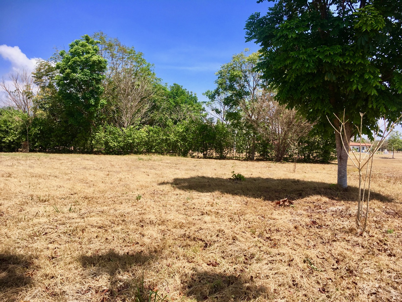BUILDING PLOT – LA COLONIA