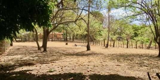 BARE LAND IN LAS PALMAS – GORGONA