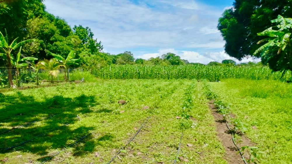 HORTICULTURE FARM IN JUAN HOMBRON